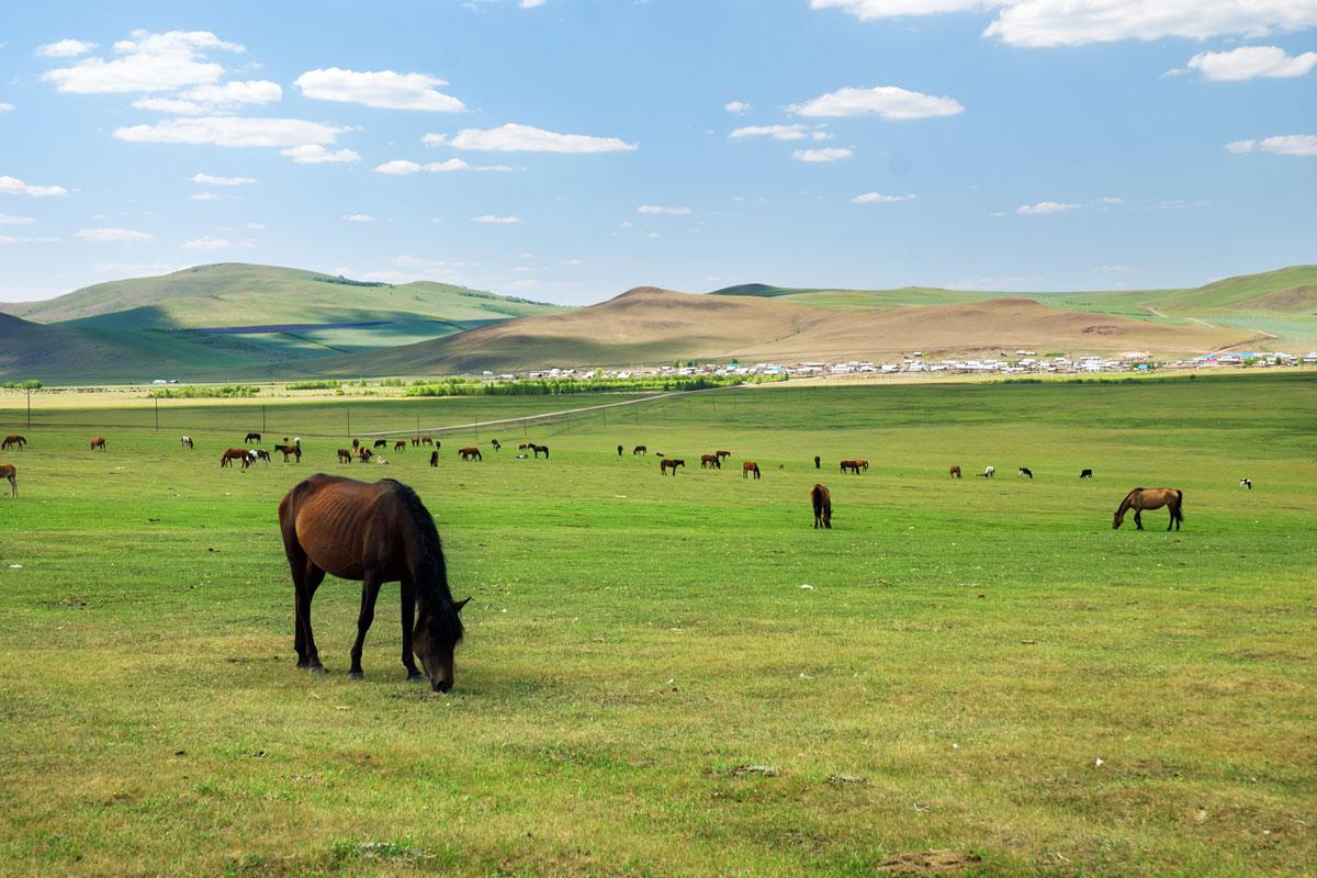 binnen-mongolie-china-shutt